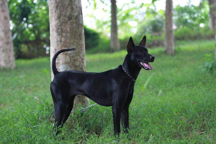 Để kiêng kỵ tốt buổi tối nên mang theo một chú chó đen đi bên ngườ