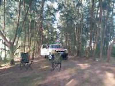 Bán xe ô tô Ford F 350 XL 1995 giá 500 Triệu
