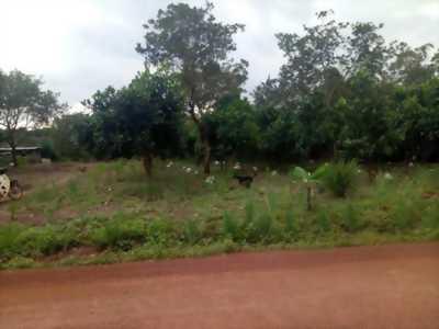 Bán đất mặt đường tránh trạm phu phí đồng phú bình phước