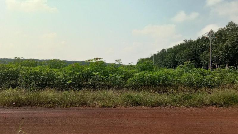 Bán 30ha đất mặt đường thuận phú đồng phú bình phước