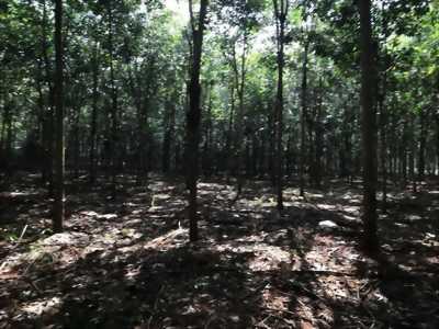Bán đất cao su xã thuận phú,huyện đồng phú,tỉnh Bình Phước