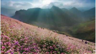 Đất khu đô thị dl sinh thái Cát Tường Phú Sinh gd1