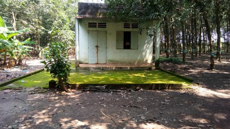 Bán 7ha cao su có nhà ở thuận phú đồng phú bình phước