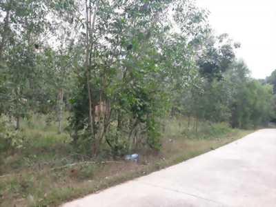 Bán gấp lô đất cao su mẫu 8 , 3 mặt tiền Suối Cao Xuân Lộc