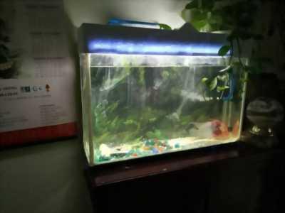 Mình không nuôi cá nên bán lại bể cá siêu đẹp sát keo giá hữu nghị cho anh em nếu cần