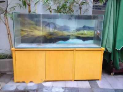 Mình đi nhanh deal tốt bể cá rồng rất đẹp, giá đưa ra có thể thương lượng thêm