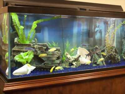 Bán cá beta và  hồ cá cảnh đẹp đủ phụ kiện giá sốc