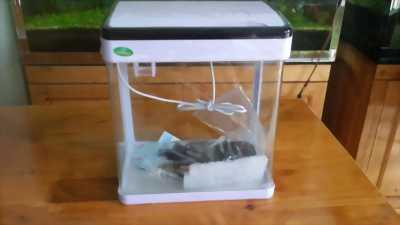 Bán bể cá cảnh thủy sinh mini làm phong thủy