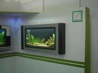 Bán bộ bể cá thuỷ sinh treo tường