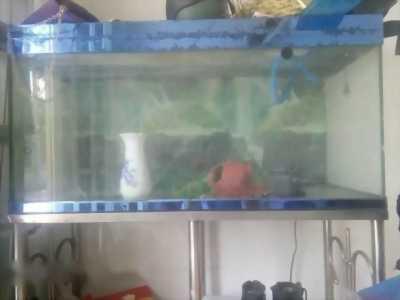 Mình đang có nhu cầu bán một bể cá lớn giá tốt