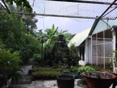 Bán đất vườn trái cây + nhà An Thạnh, Thuận An, Bình Dương