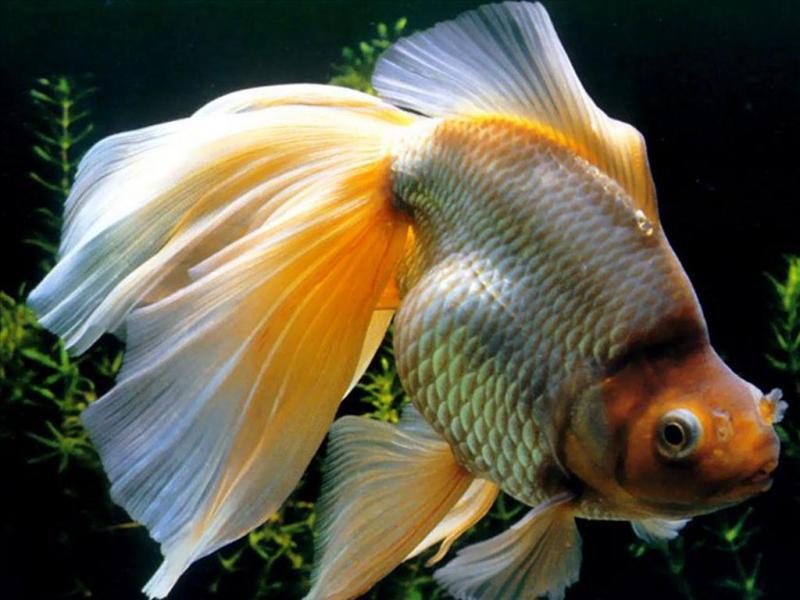 Kinh nghiệm nuôi cá cảnh tốt nhất cho người mới