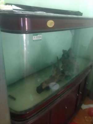 Bán bể cá cảnh vẫn còn dùng tốt
