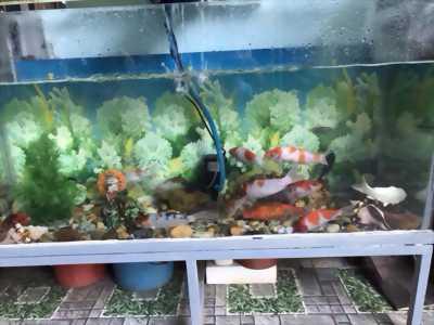 Bán 2 hồ cá