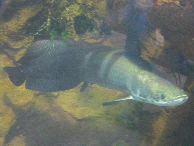 Bạn có biết cá hải tượng ăn gì không?