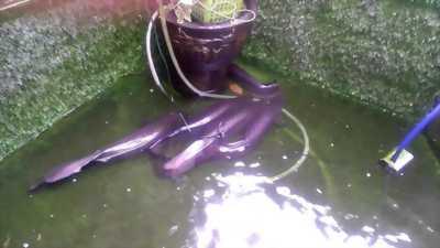 Hải Tượng Long đẹp nuôi tại nhà  cần tìm chủ mới