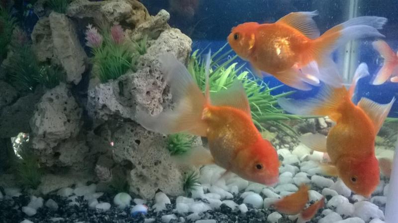 Tại TP HCM: mua thức ăn cho cá cảnh ở đâu?
