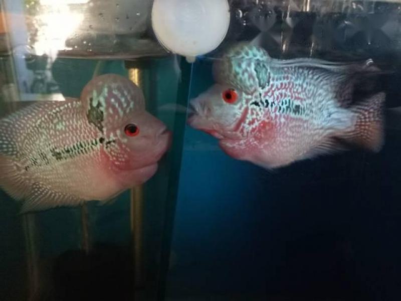 3 Em Cá La Hán