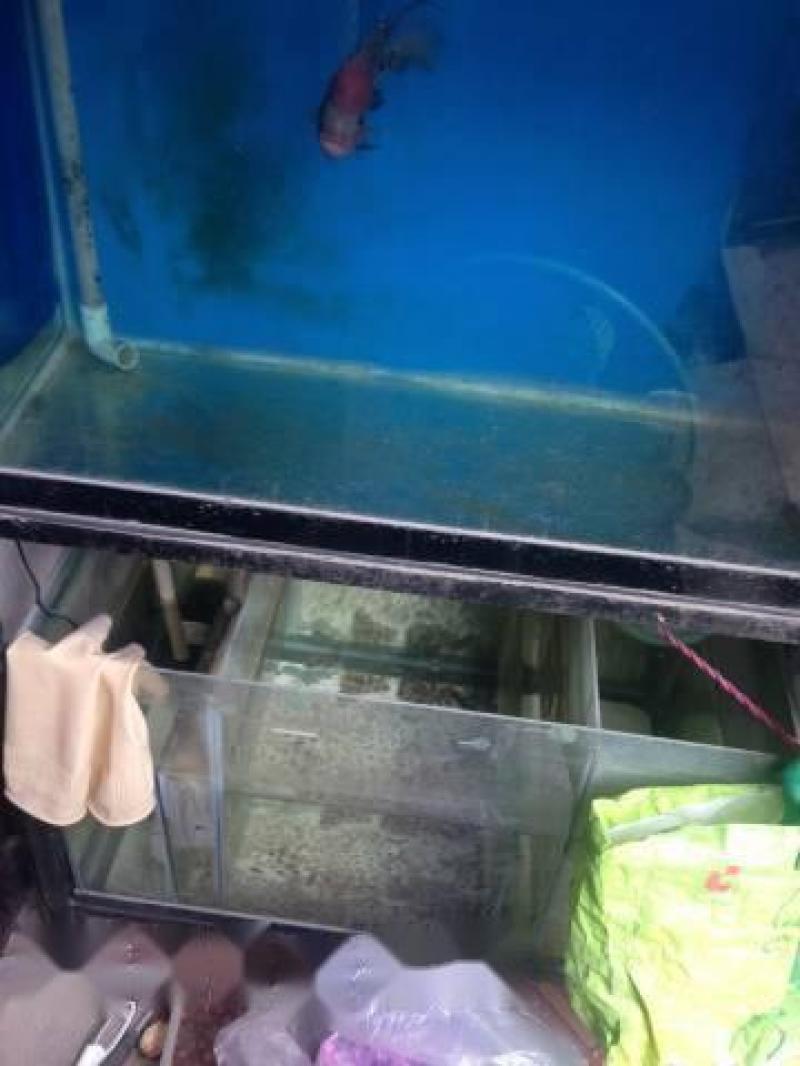 Cần bán trọn bộ hồ 8 tất + cá La Hán