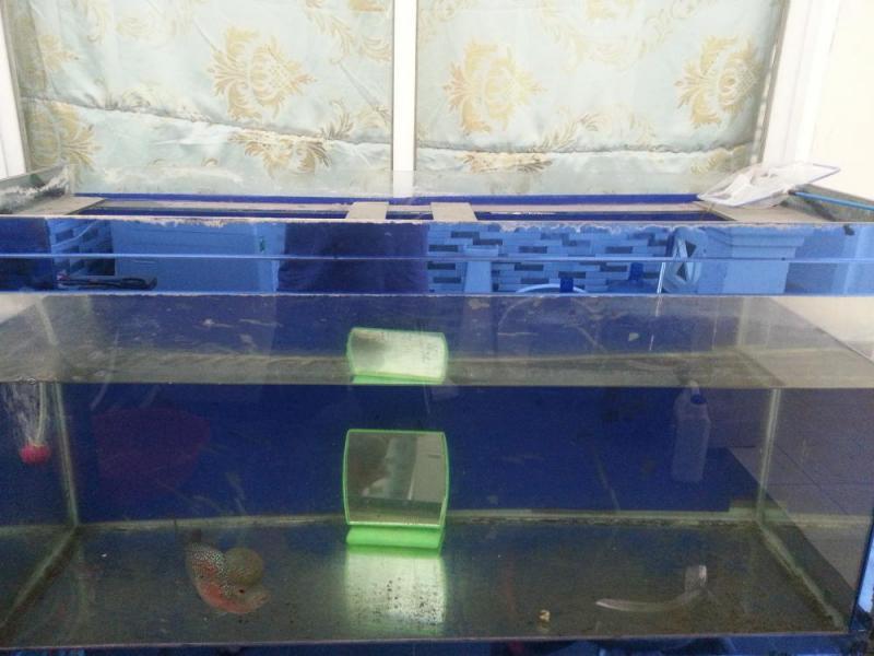 Bán cá la hán và hồ cá