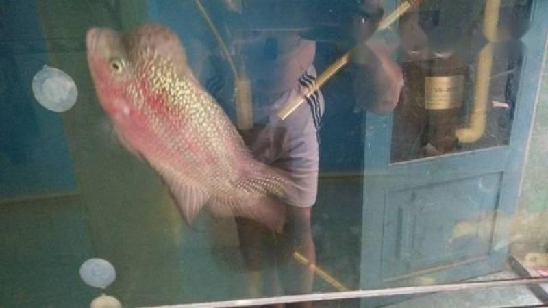 toàn bộ cá la Hán
