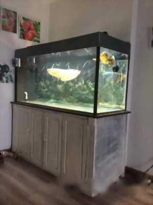 Cần bán bể và cá rồng