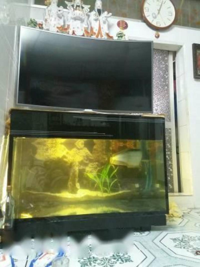 Cá rồng kèm bể mới 99%