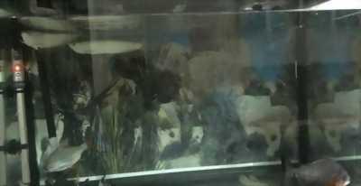 Cần bán bể đúc Camry 80cm,  cá rồng ngân long và . . .