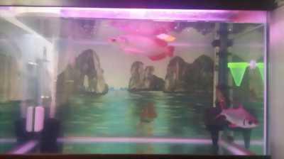 Bán trọn bộ hồ cá Rồng+Hán