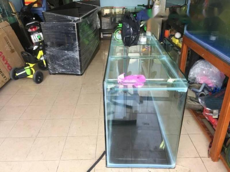 hồ nuôi cá rồng mới 100%