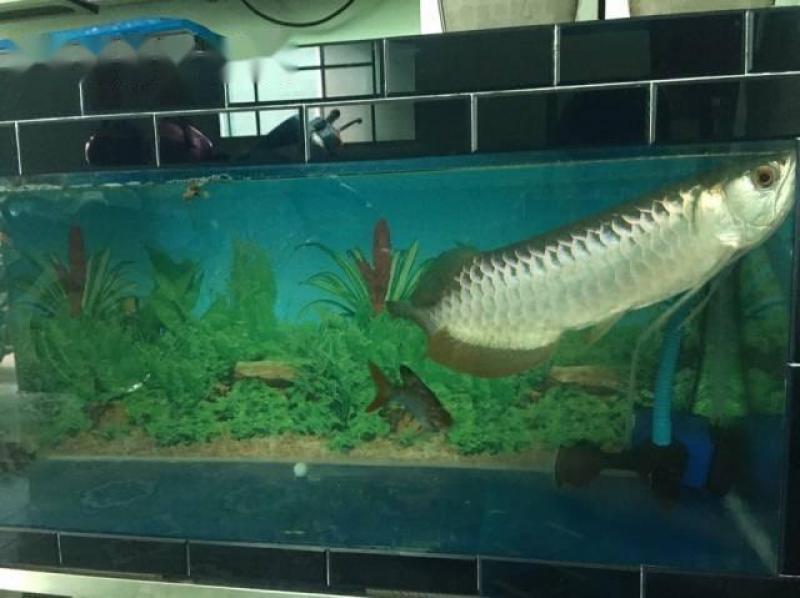 Bán nhanh full hồ và cá rồng