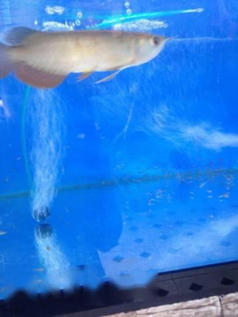 Bán cá rồng HB