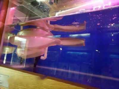 Bán cá rồng ngân long,  size trung