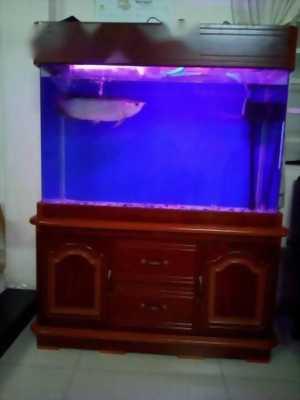 hồ và cá rồng size 40cm