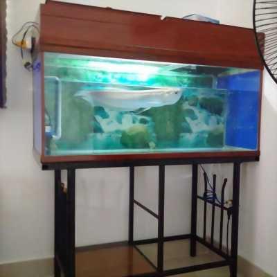 Bán hồ và cá rồng ngân long