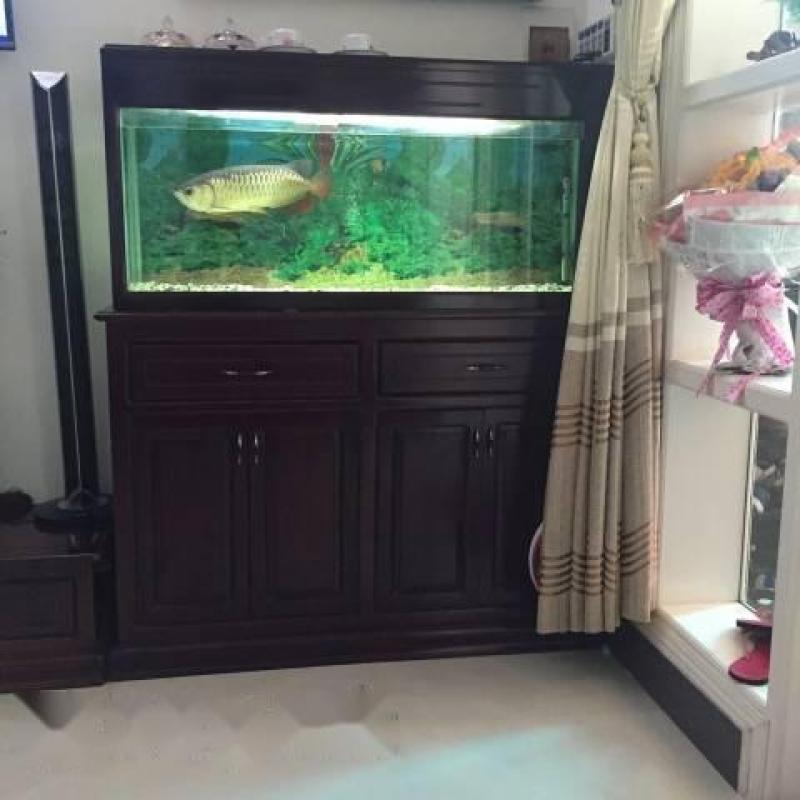tủ và cá rồng