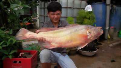 Cá Sửu Vàng vừa bắt Được sáng nay
