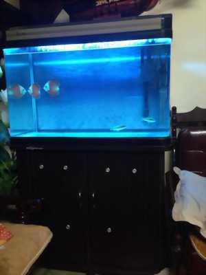Bán bể cá mới dùng được 3 tháng.