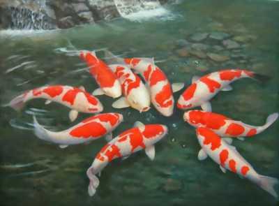 Bán cá kiểng,các loại đồng vật,hải san thiên nhiên