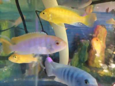 Thanh lý 15 chú cá ALi màu.size 7 (10000/con)