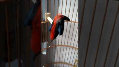 Chim chuyền đẹp