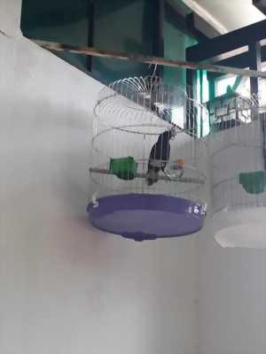 Cần bán chim cảnh