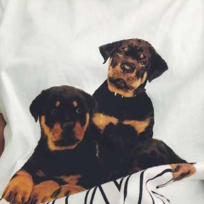 Chó rottweiler dòng đại mặt nhăn 70 ngày tuổi