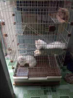 chuồng nuôi chó, mèo 3 tầng