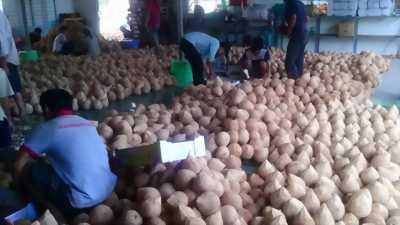 Bán dừa khô