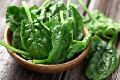 Hạt giống cải bó xôi rau chân vịt tại Củ Chi
