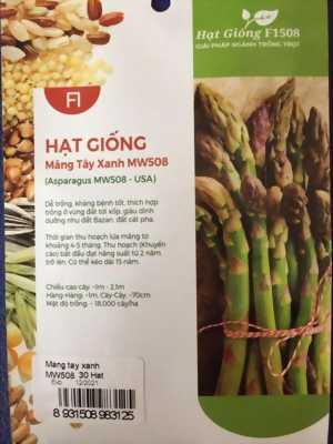 Hạt giống măng tây xanh F1508