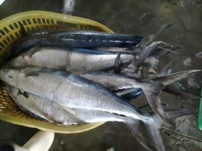 Bán Cá Thu, Cá Bớp Phú Quốc