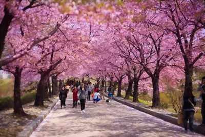 Du xuân xứ sở Hàn quốc cùng ETV ms Huyền 0966001379