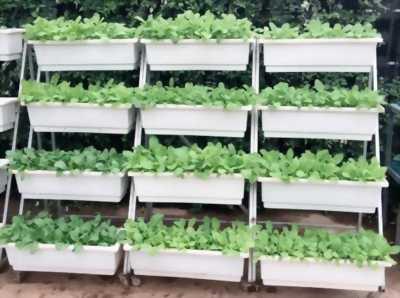 Kệ trồng rau sạch KTRS8098